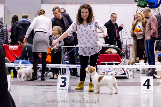 XXII Międzynarodowa Wystawa Psów Rasowych Katowice