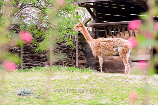 odwiedzić zoo w opolu