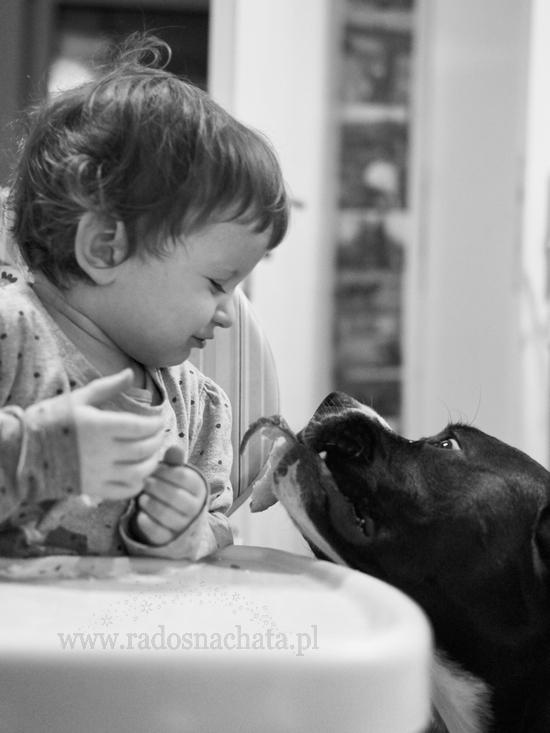 najlepsza karma dla psa