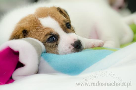 Socjalizacja psa – jak się za to zabrać?