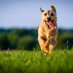 Sucha karma dla psa, a zdrowe zęby i kości