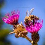 Jak leczyć się ziołami, czyli fitoterapia