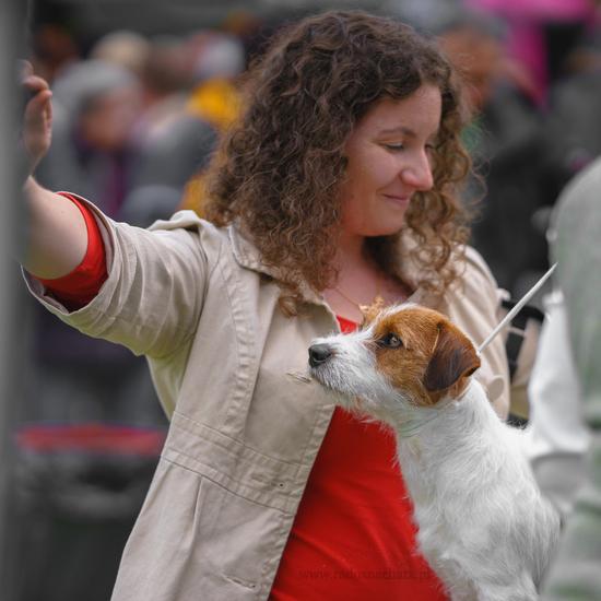 relacja z wystaw psów