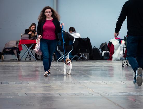 relacja z wystawy psów