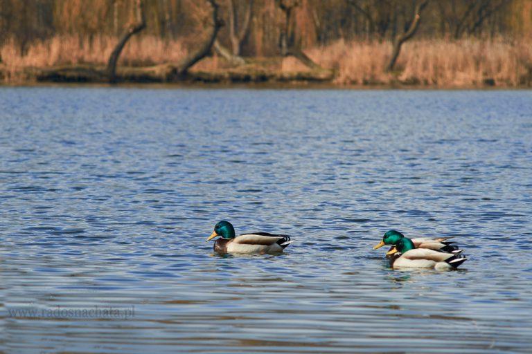 Ptaki zimą – czy dokarmiać je? Czym i kiedy?